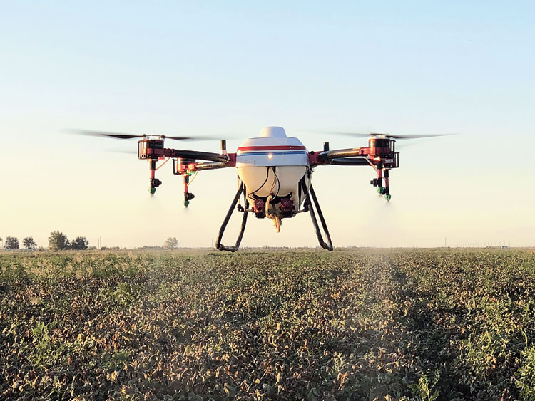 A drone sprays pesticide on an agricultural field