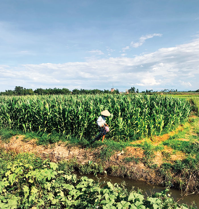 A farmer in a conical hat in a lush green field is the quintessential image of Vietnam