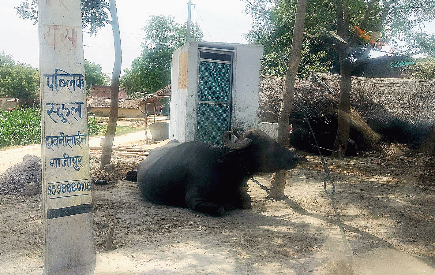 A buffalo resting in front of a toilet in Ghazipur.