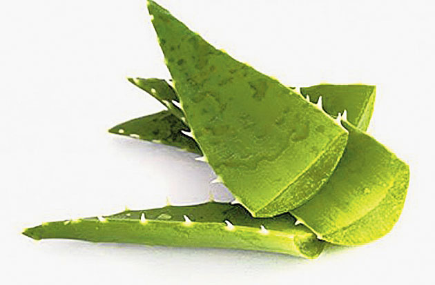 Aloe vera gel is great for your skin