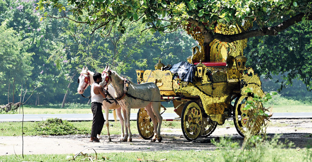 A coachman and his horses take a break under a tree on the Maidan around 12.55pm on Tuesday