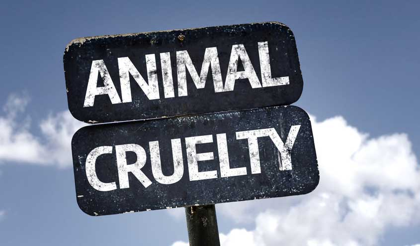An FIR has been registered by some animal lovers. A case has been started under IPC Sections 268 (public nuisance) and 429 (mischief by killing or maiming an animal), and Section 11 of the Prevention of Cruelty to Animals Act. We will arrest the people involved in the cruel act.