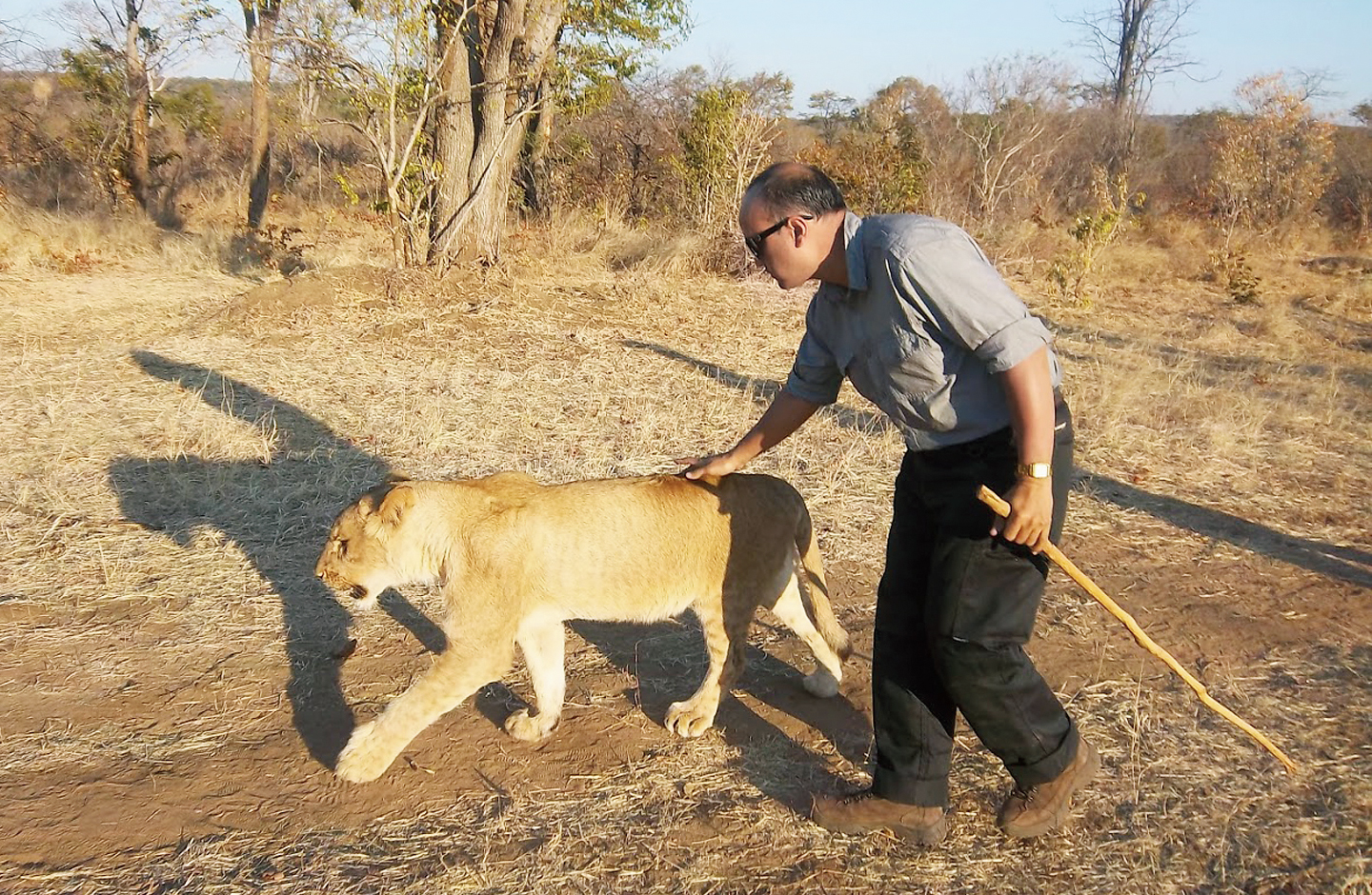 Pal pets a lion at a park in Zimbabwe