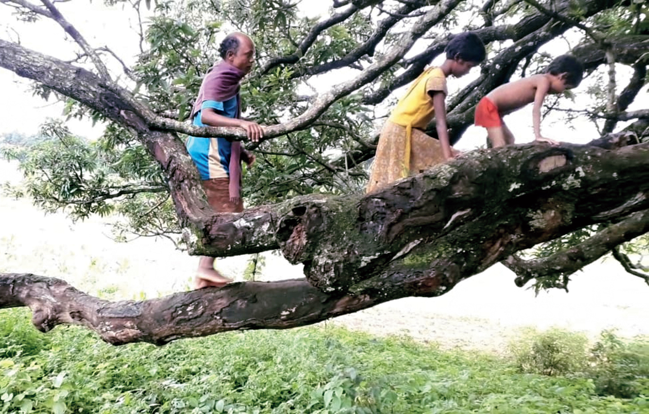 Nayak and two of his children on the tree