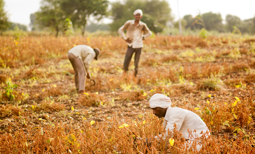 Sops for farmers and traders