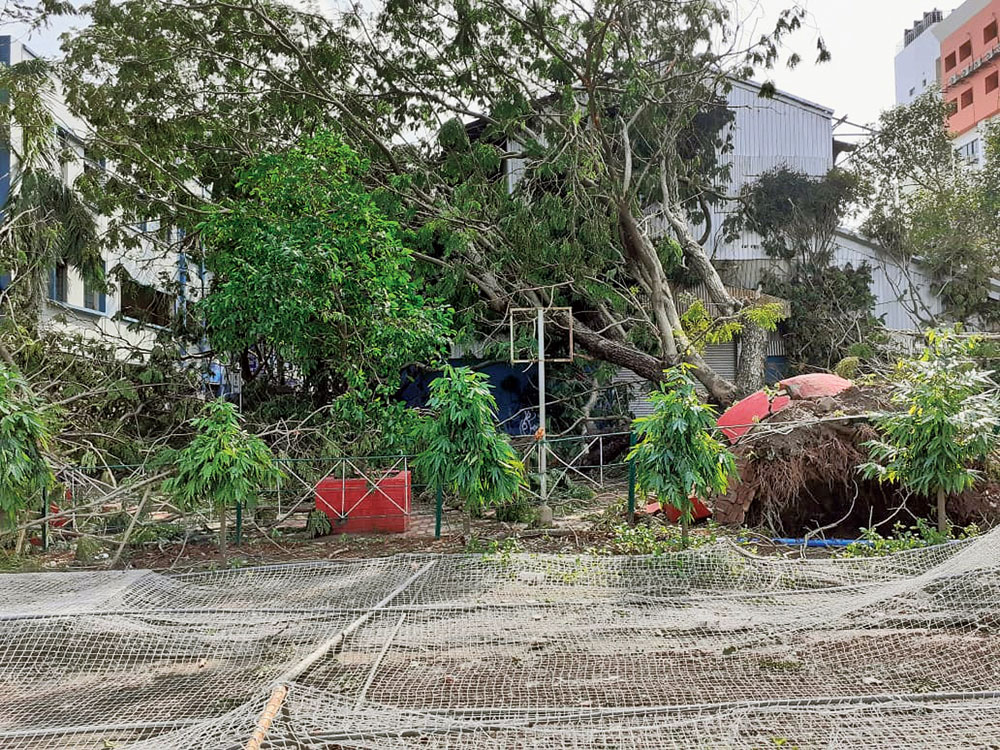 An uprooted tree on a passage that goes past the football ground on the campus