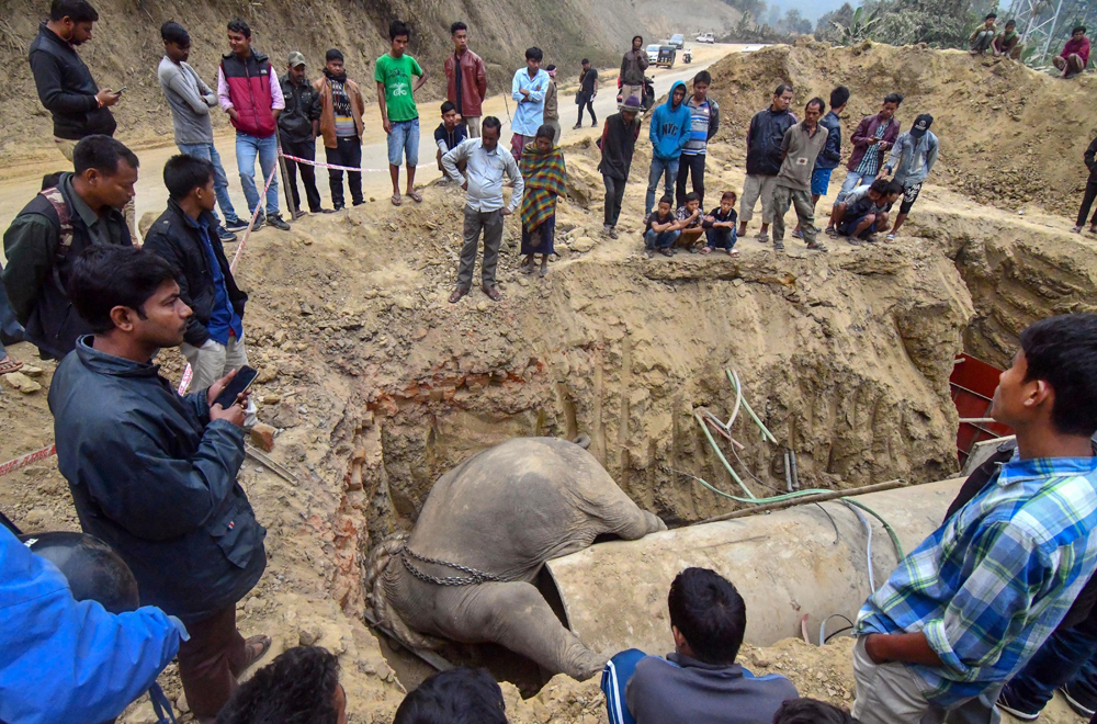 Onlookers stand near an elephant carcass at Pecharthal in North Tripura on December 21