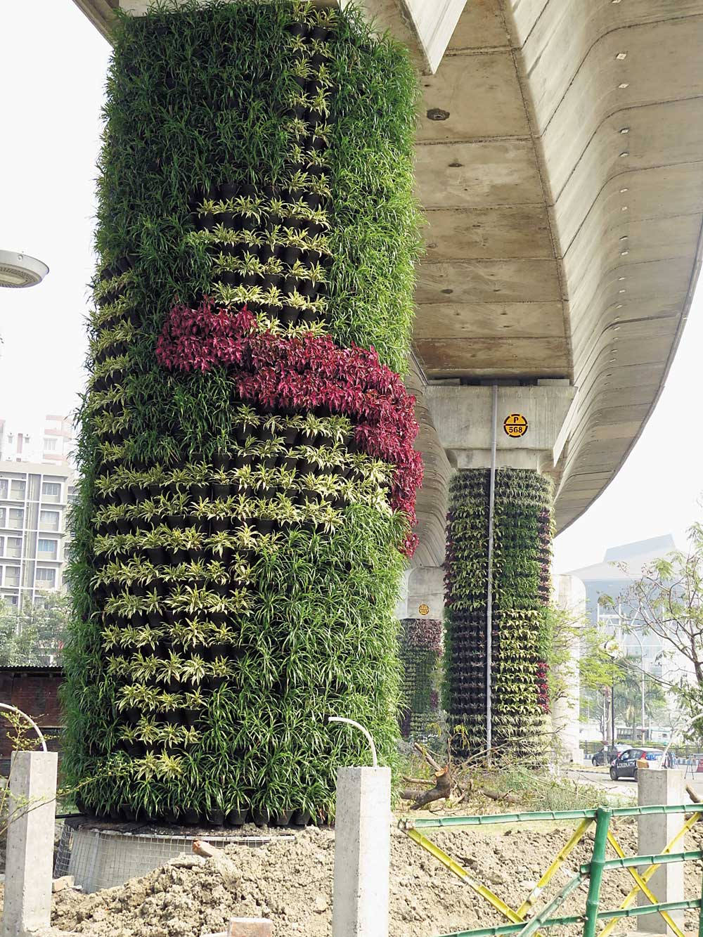 A closer look at the foliage growing on the pillars