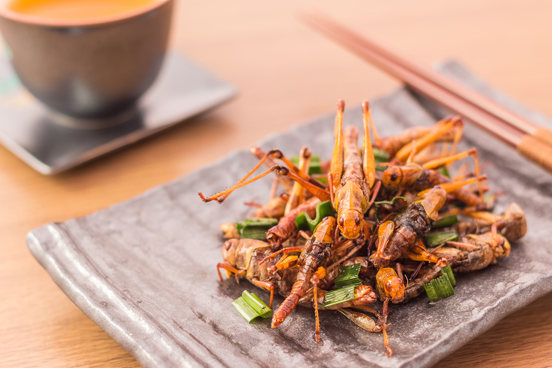 Locust, pan-fried