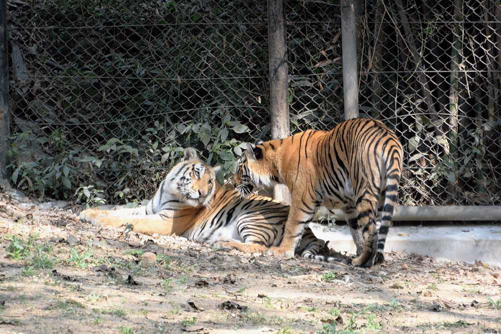 Just two cute: Sunaina (sitting) and Saloni at Tata zoo (below) in Jamshedpur on Tuesday.