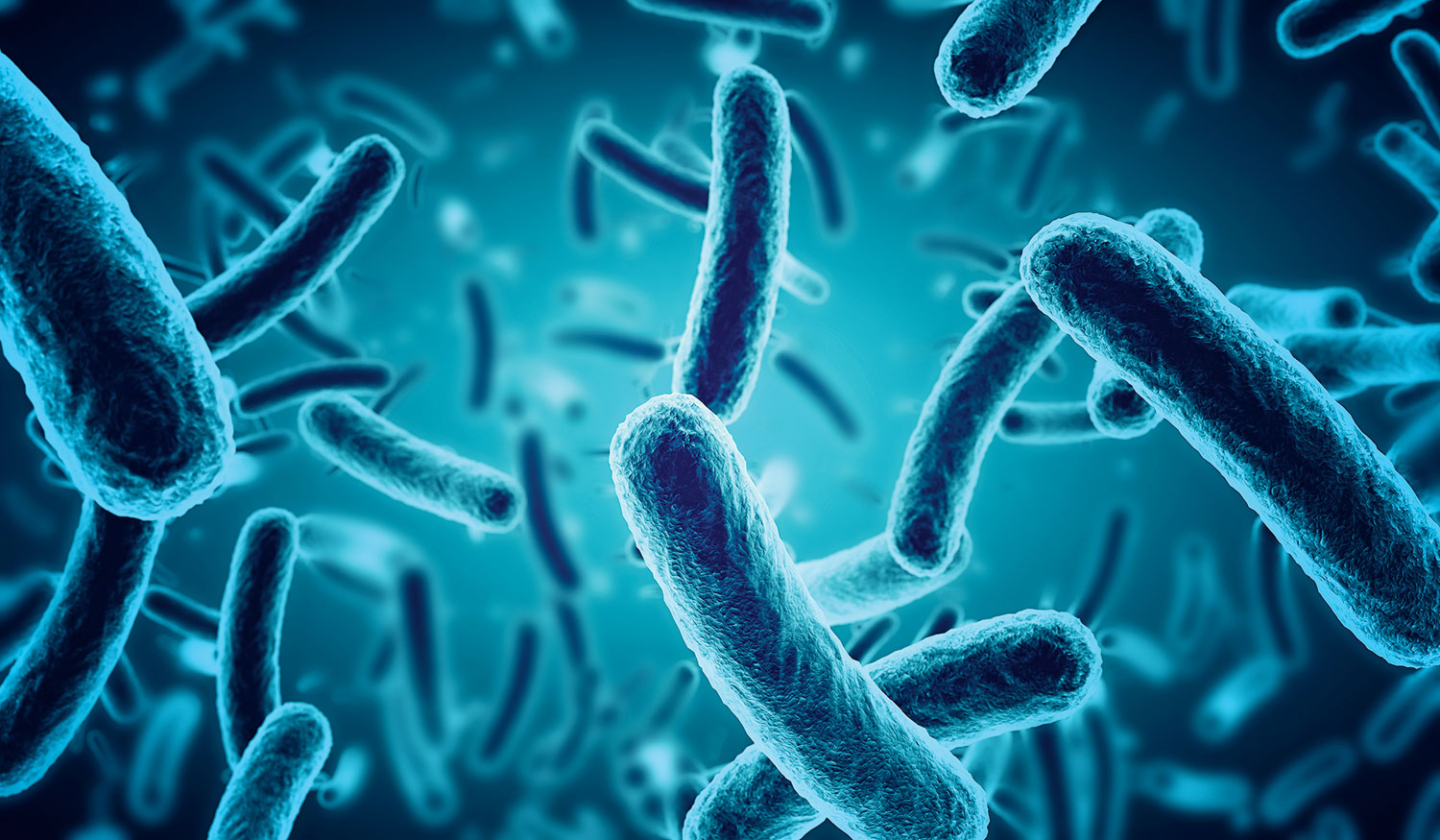 Many companies today use genetically engineered  microbes to make medicines like insulin or useful chemicals like detergent enzymes