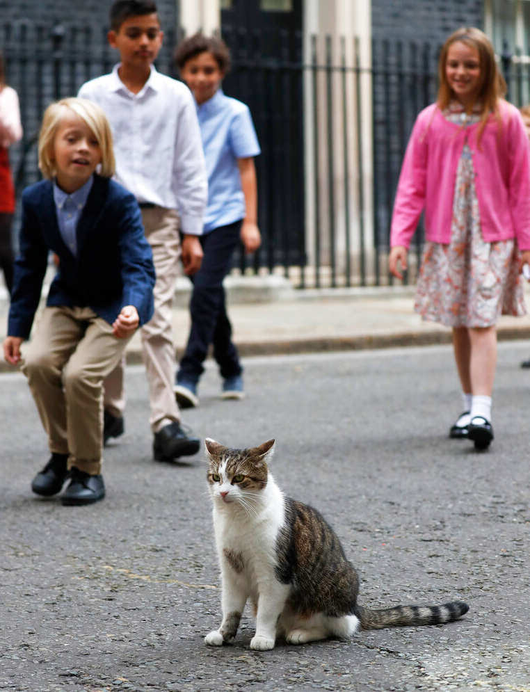 Schoolchildren approach Larry the cat as they leave after a scheduled meeting with Britain's Prime Minister Boris Johnson at 10 Downing Street in London, Friday, August 30, 2019.