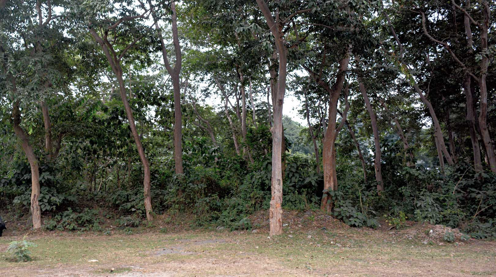 The thicket adjacent to Jamshedpur Horse Riding School in CH area where the night rides will take place.