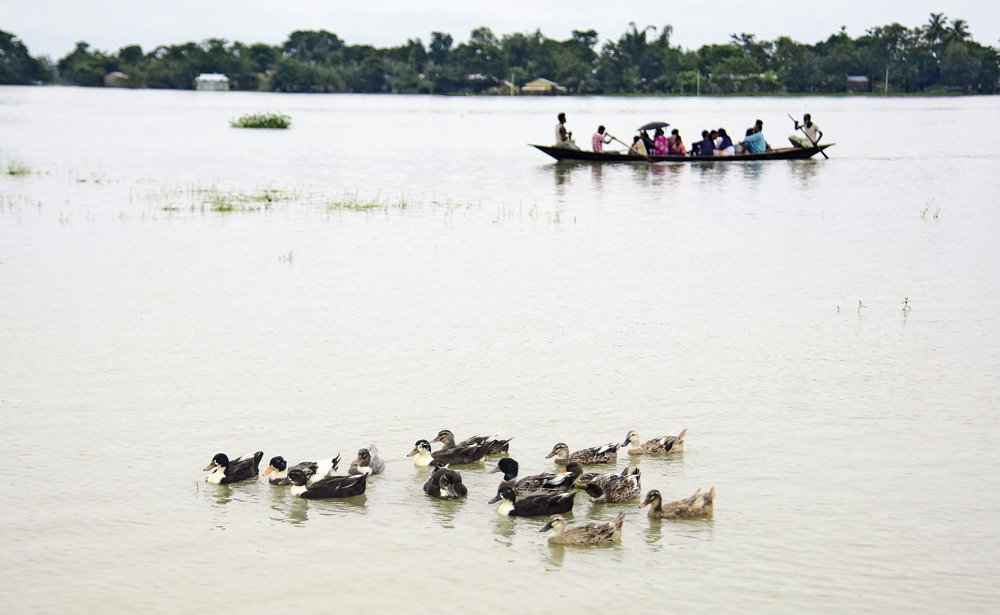 Ducks swim in floodwaters as people shift to a safer place on a boat in Assam's Morigaon.