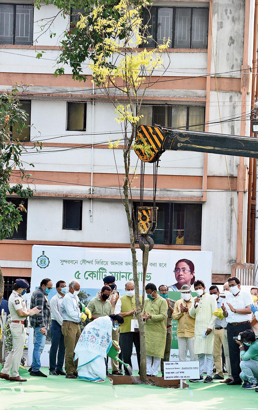 Chief minister Mamata Banerjee plants a neem tree at Harish Park on Friday.