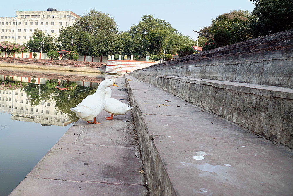 A pair of ducks at Hatania Talab, the only clean water body in the capital, make for a pretty picture
