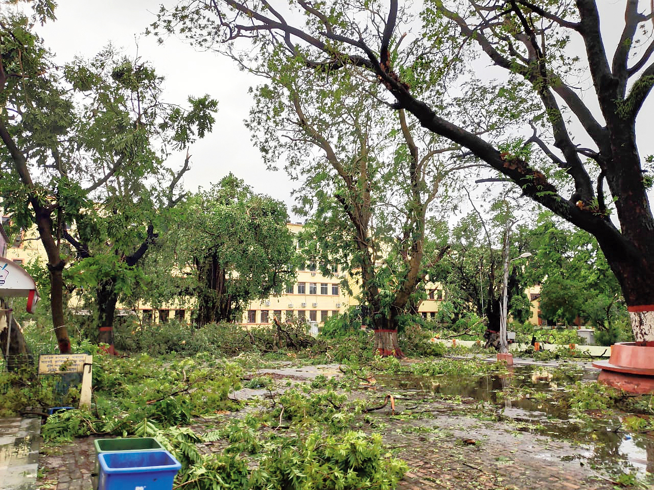 A tree at IIEST Shibpur that were damaged by Cyclone Amphan on May 20