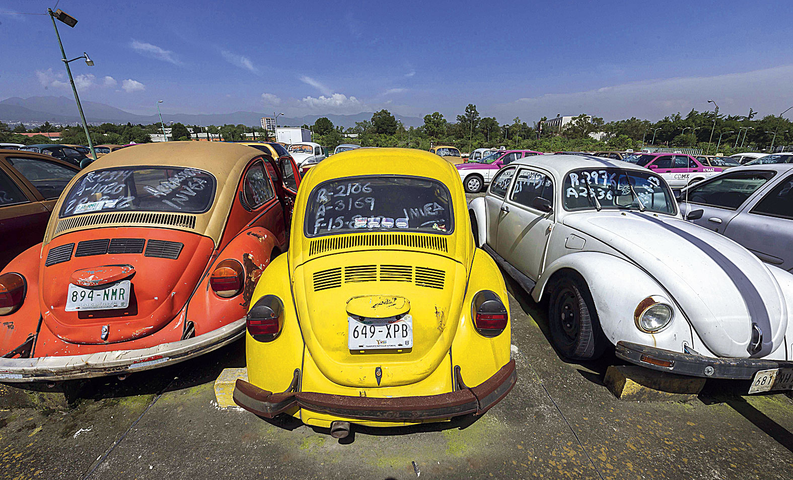 Old Volkswagen Beetle cars lined up in a large yard for impounded cars in Mexico City. Mexico was the last country in the world where Beetles of the original shape — with changes over the years — were manufactured