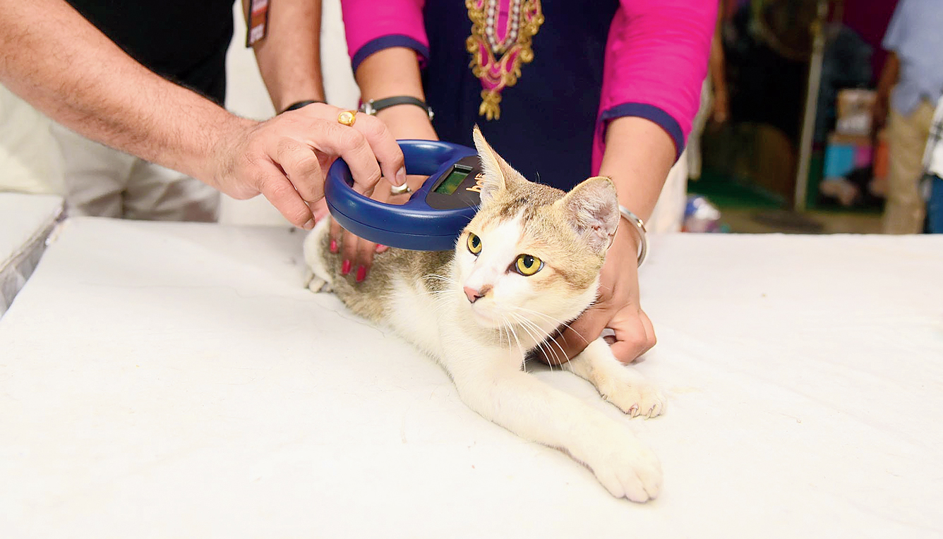 A microchip reader placed on a cat displays his details.