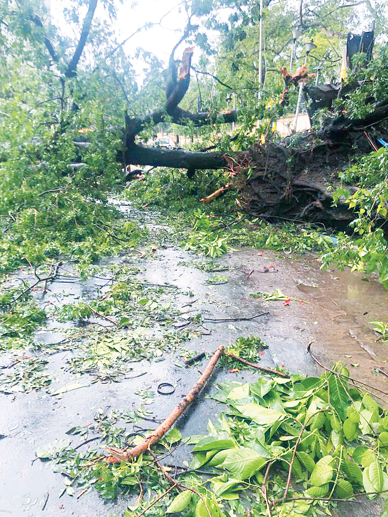 One of the fallen trees the walker had to get past on Ballygunge Circular Road.