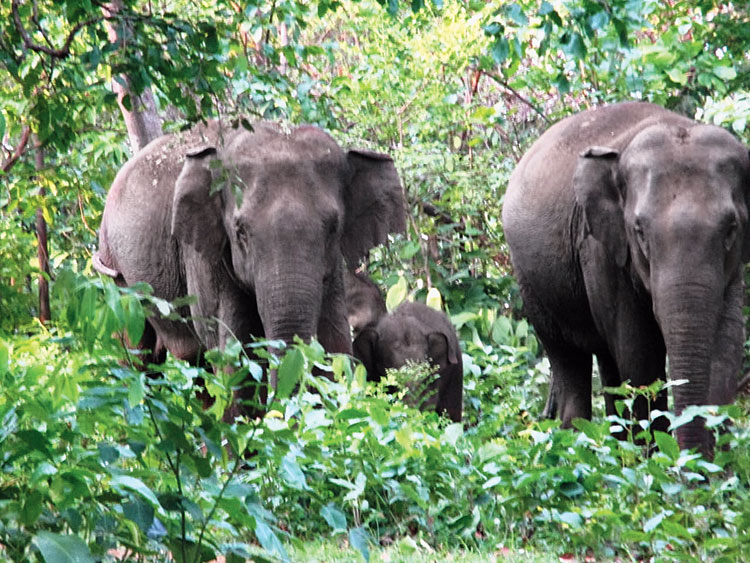 On Thursday, two children were killed and their mother sustained injuries when a herd of wild elephants barged into their house at Hadlapara village under Goalpara sadar range forest