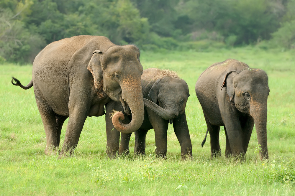 """A forest official said, """"We have less manpower but we are patrolling the areas. The villagers are also helping us to drive the elephants away. This year, there is a big herd, which divides into 20-30 elephants and moves in different directions and hence the difficulty..."""