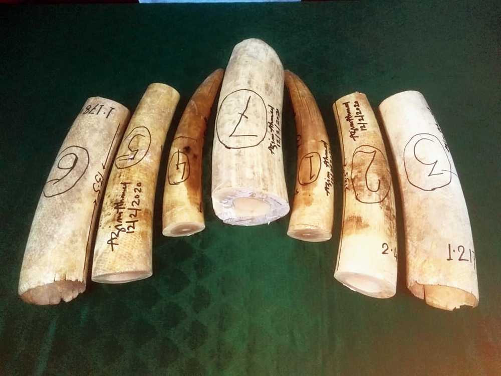 The ivory pieces seized in Siliguri