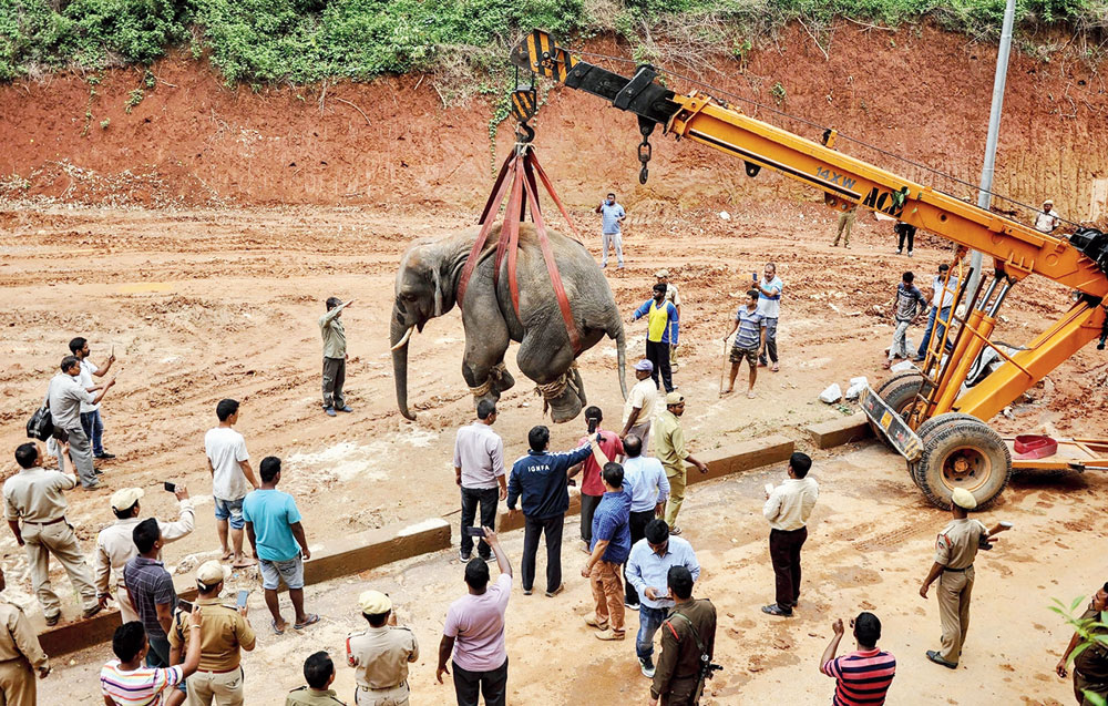 Forest officials capture the elephant in Guwahati on Wednesday