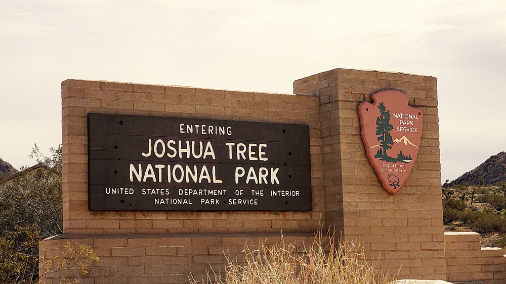 Joshua Tree National Park is a four-hour drive from the city of Los Angeles