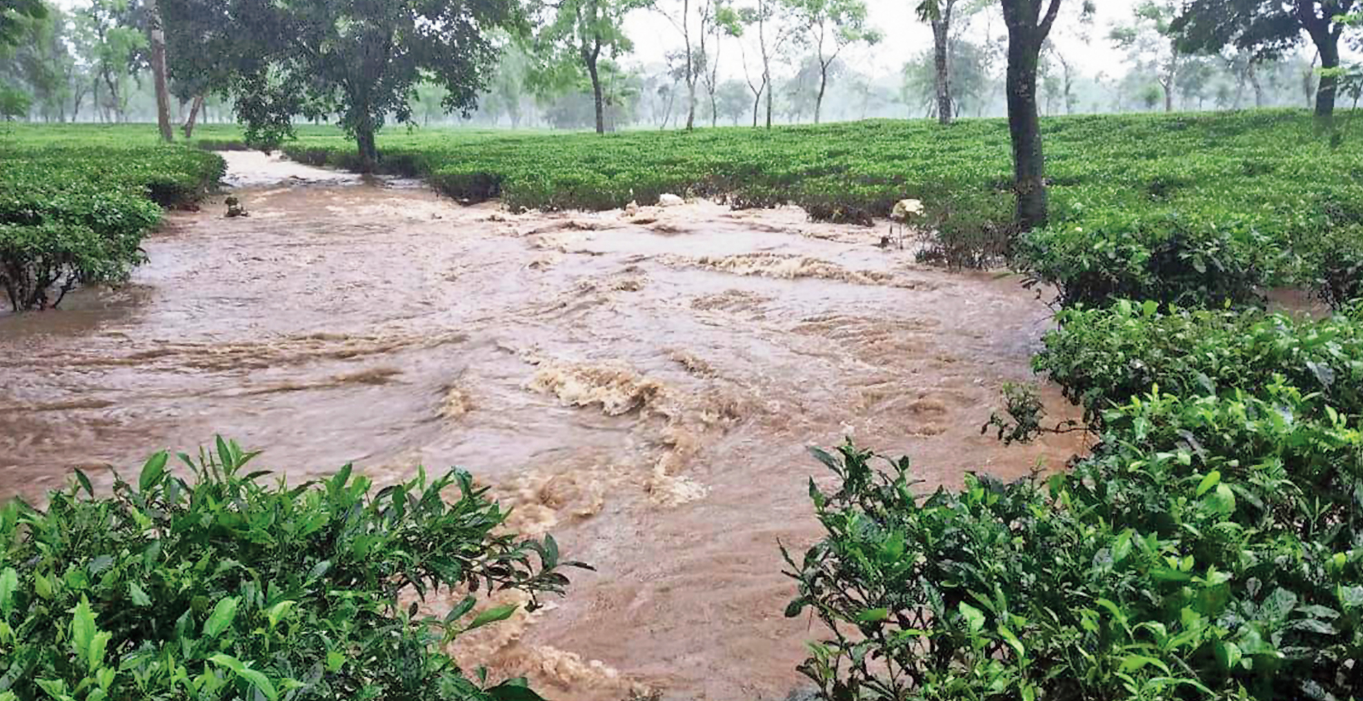 The Debpara tea estate  inundated by the overflowing Hatinala stream in Banarhat, Jalpaiguri.