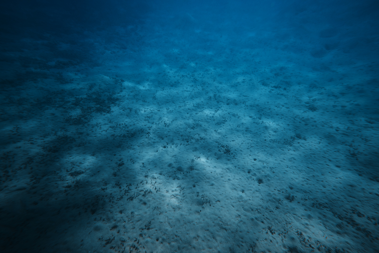 Unique oil-eating bacteria found in world's deepest ocean trench