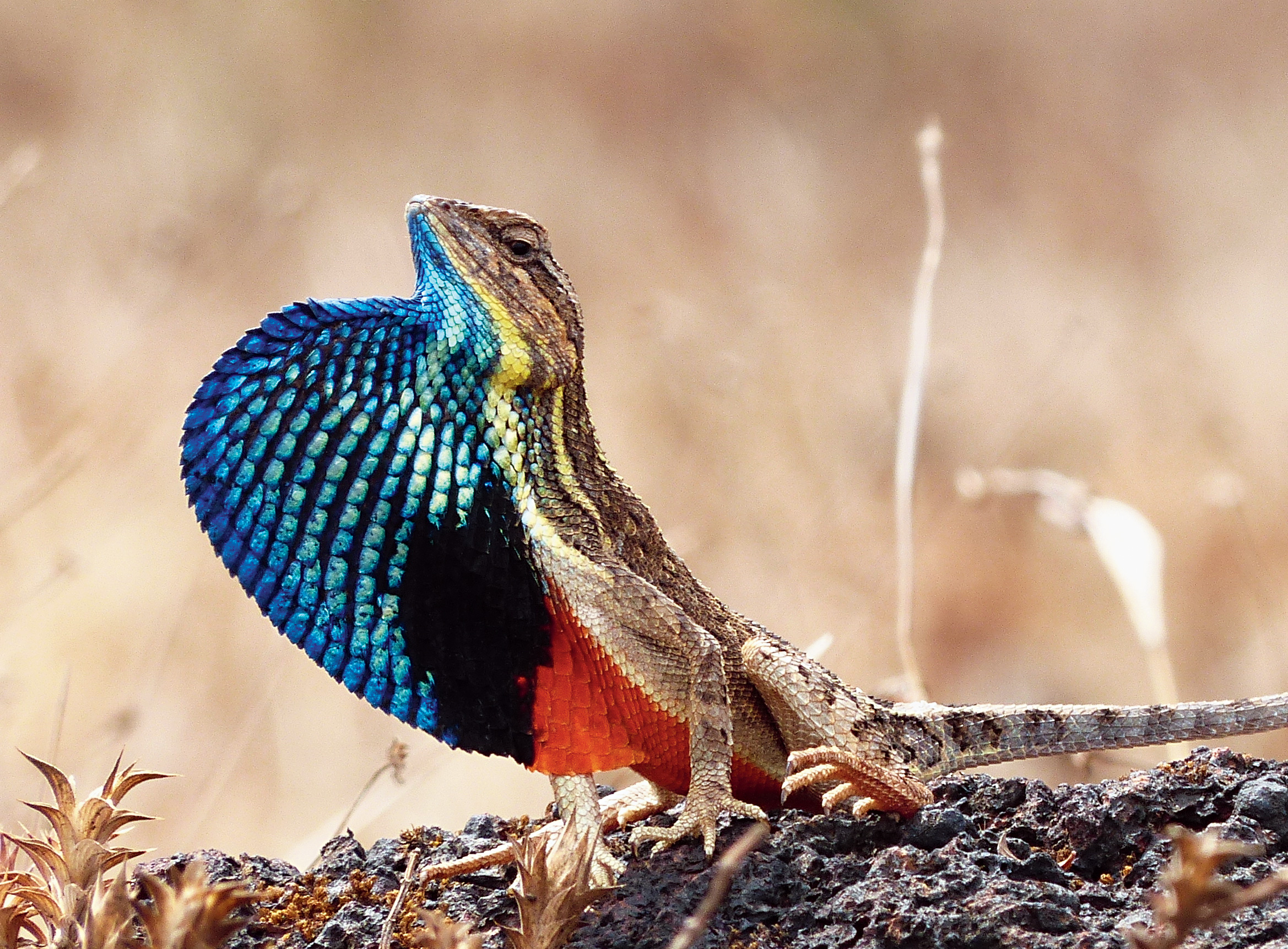 Wind farms: where kites stay away, lizards play