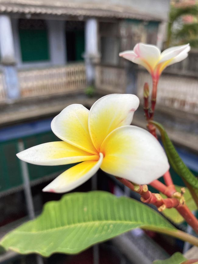 It's a tough call if you are asked to spot a picture taken on the iPhone 11 Pro and the iPhone SE. The colours pop. The pictures are detailed. There is accuracy. And the pictures are always sharp