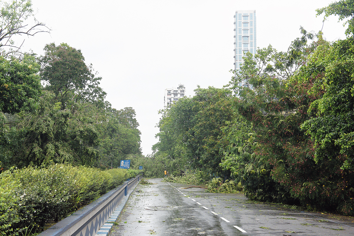Fallen trees make Chowringhee almost unrecognisable on Thursday.