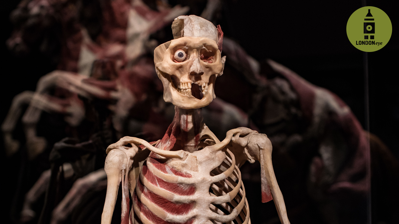 London exhibition featuring corpses is dead good