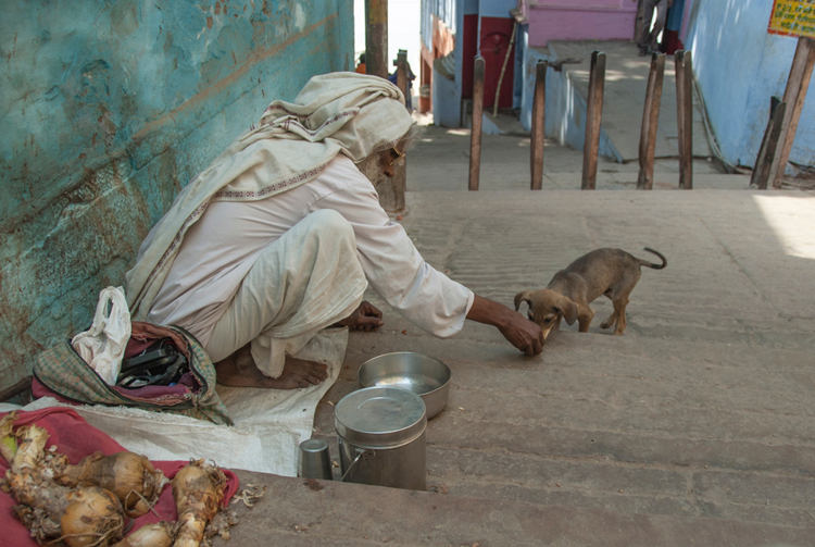 Kindness counts: Street animals should be provided with suitable medical support and food