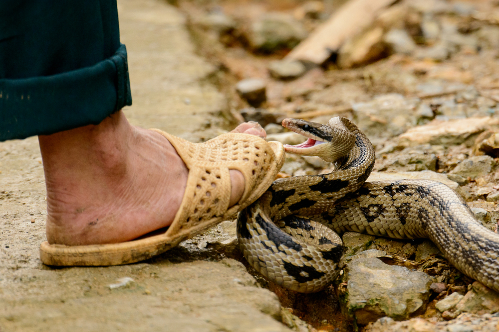 The incident took place around 5 am on Sunday morning at Lem panchayat's community centre when migrant worker Bablu Kumar was leaving his room at the quarantine centre when a snake got entangled in his legs and bit him.