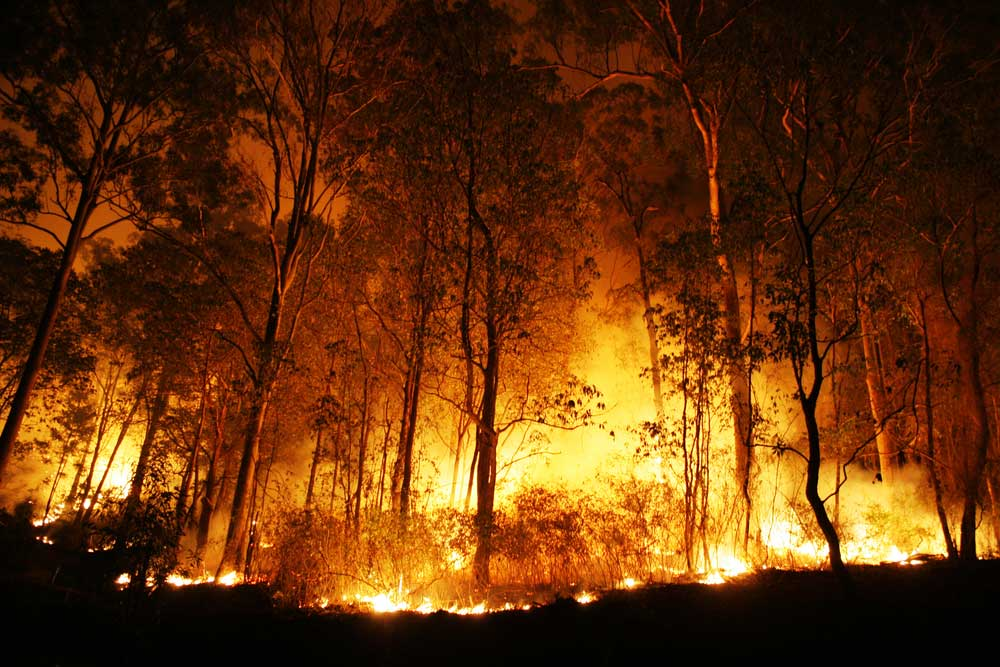 The fire at Kashijan reserve forest under Kakopathar forest range in Doomdooma forest division was subsequently doused but ignited concerns among environmentalists and wildlife organisations that encroachment of forest land and misuse of forest property was still a serious matter.