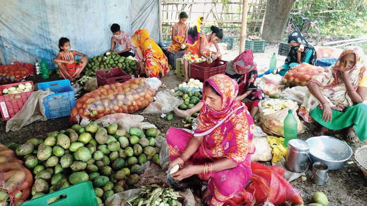 Women slice raw mangoes at a plantation in Malda on Monday.