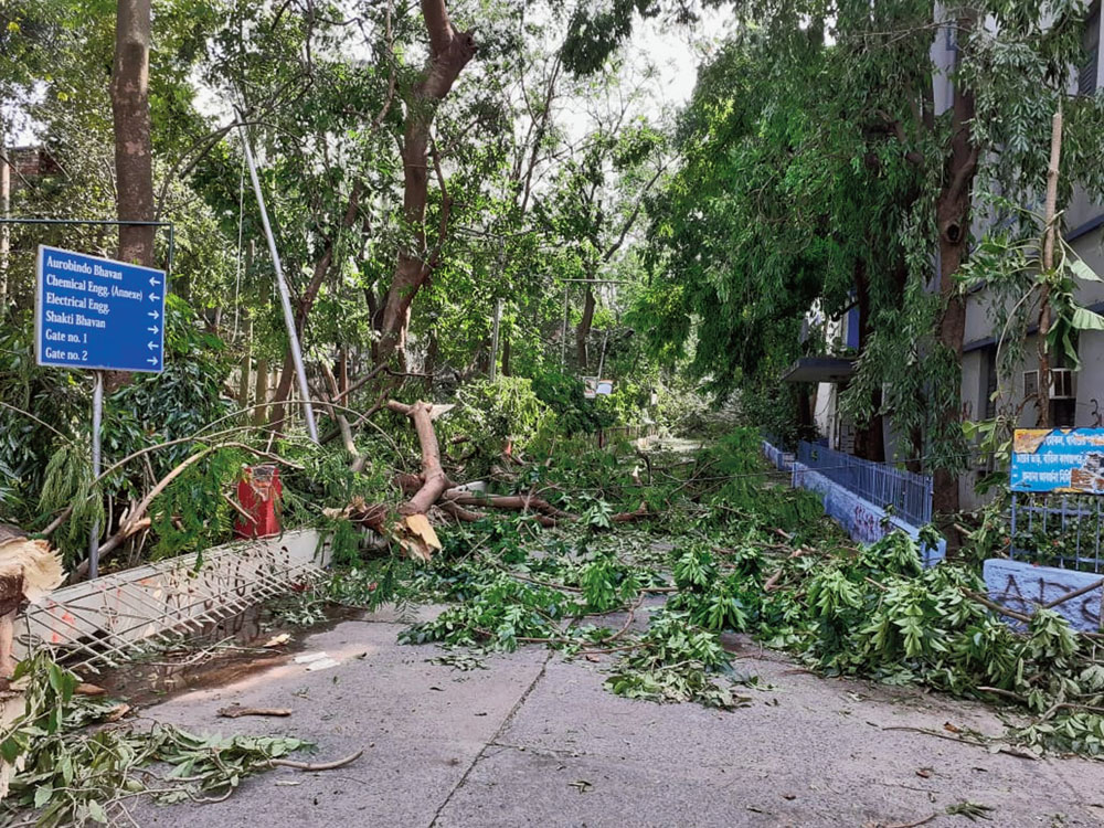 Broken branches on a road leading to Aurobindo Bhavan.