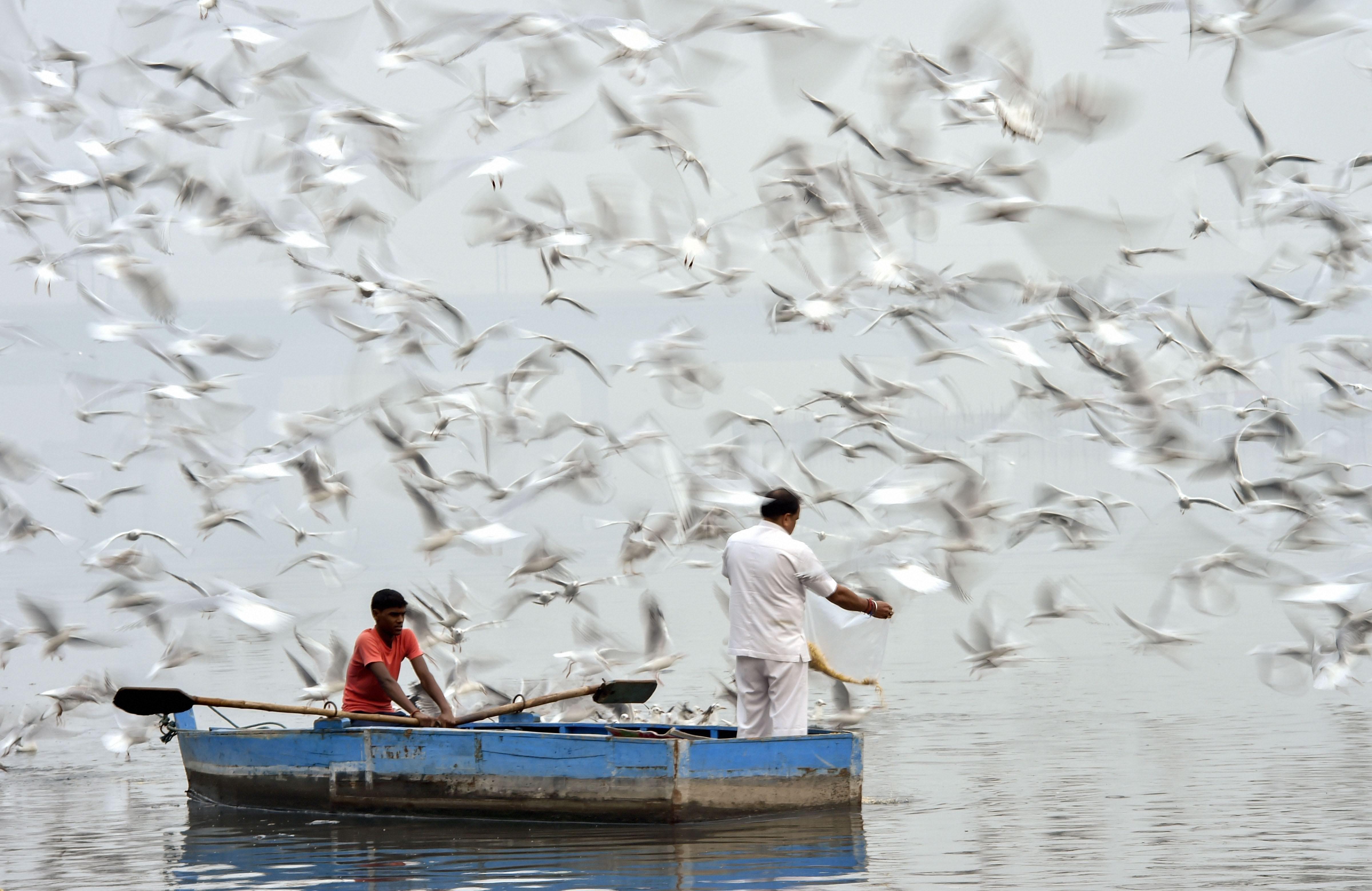 Birds fly over Ganga River on a smoggy morning, in Prayagraj, Monday, November 4, 2019.