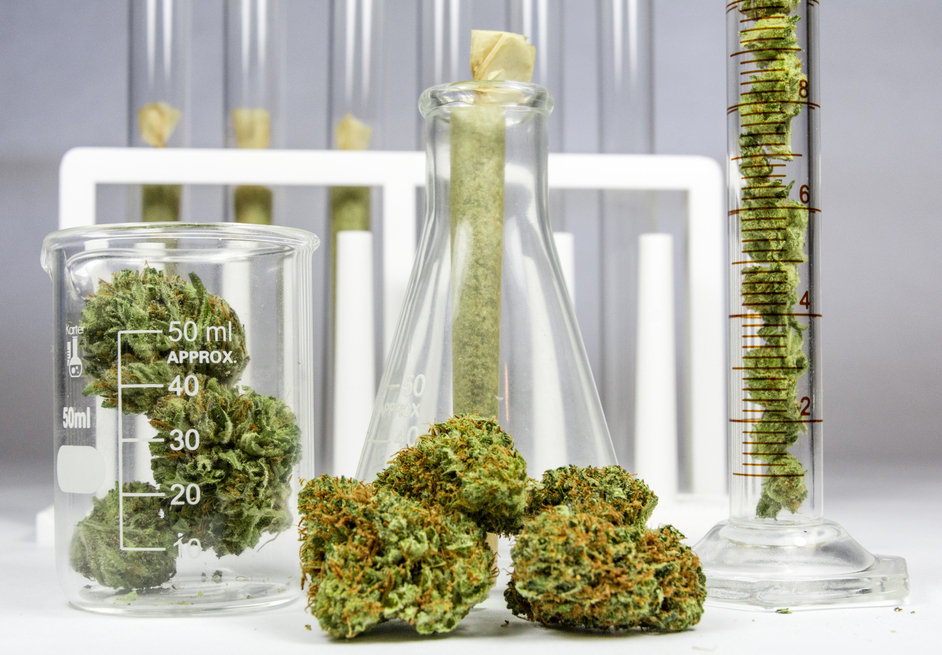 Human clinical trials of cannabis as medicine
