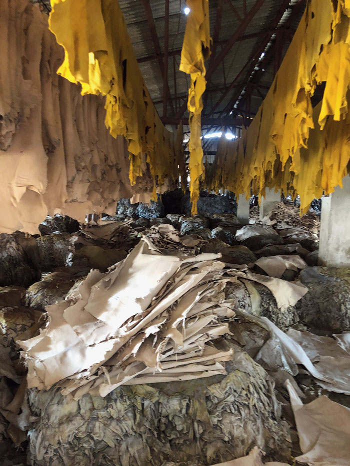 No country for tanneries