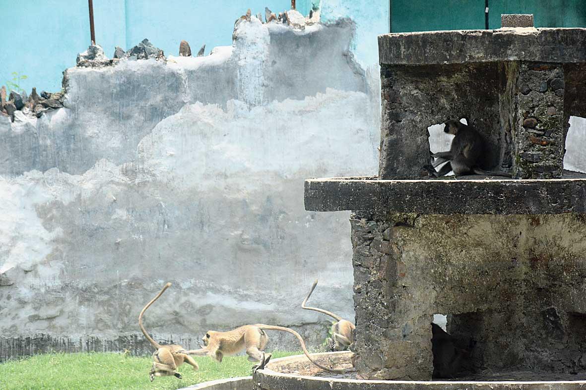 Langur enclosure at Tata Steel zoo in Bistupur, Jamshedpur.