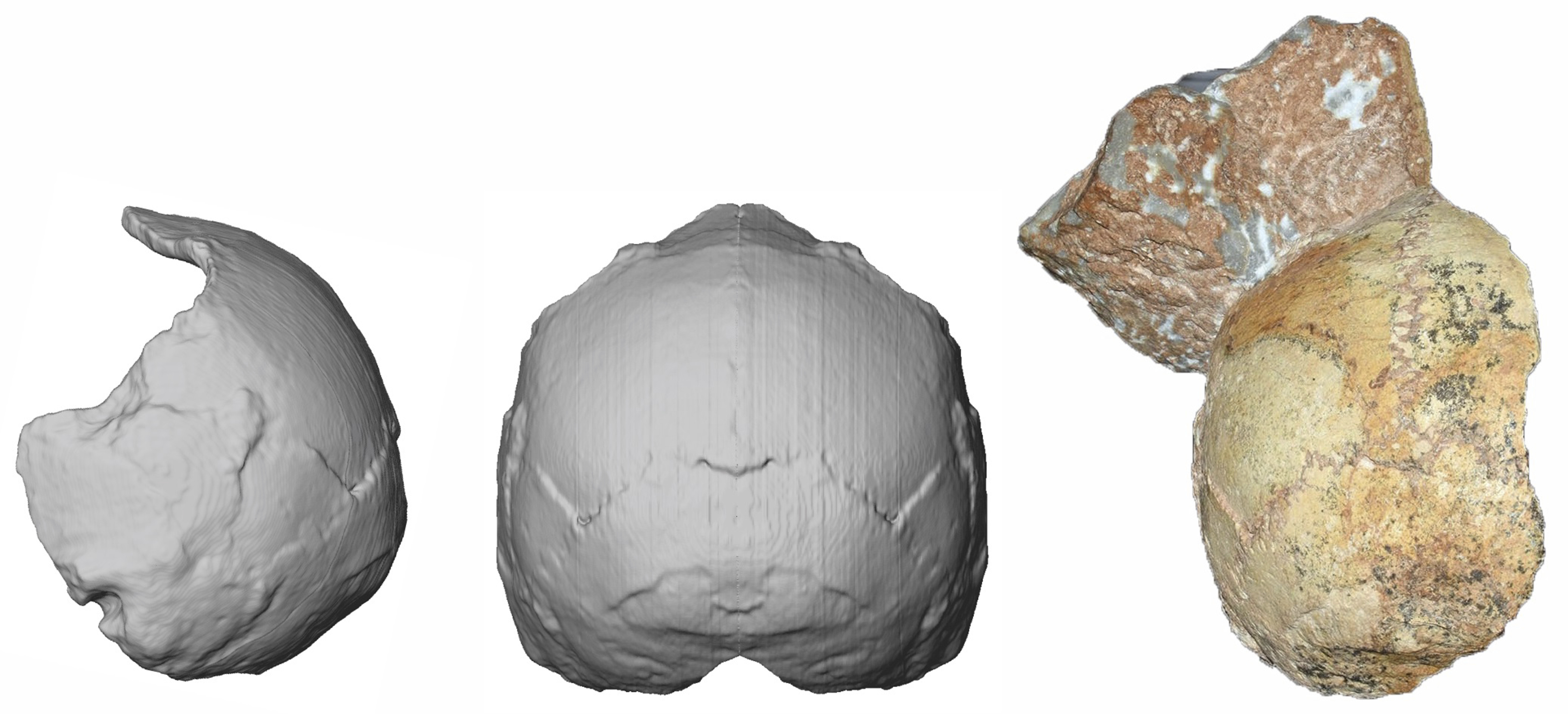 Partial cranium, over 210,000 years old (right), and its reconstructions (middle and left)