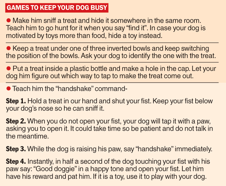 How to keep your dog busy