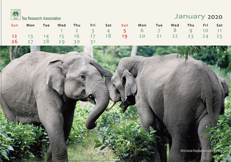 The January pages of the calendar