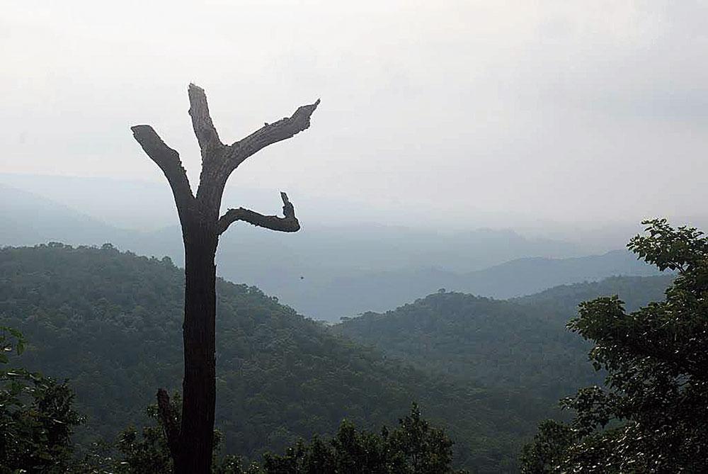Magnolia point in Netarhat.