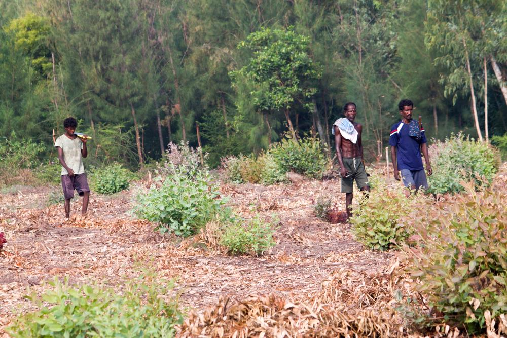 Kattupalli Forest, Thiruvallur District, Tamil Nadu India.