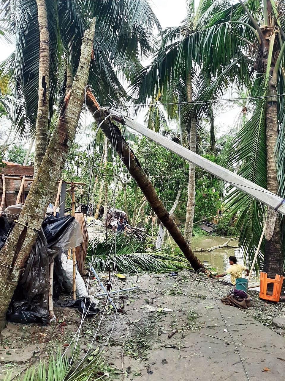 A tree and power pole fallen in the cyclone at Nandigram.
